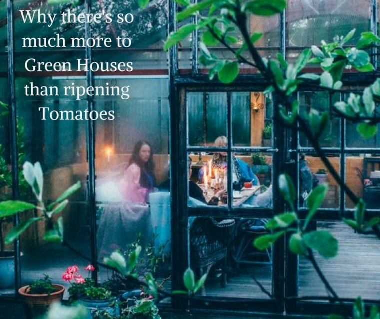 Why there's more to green houses than tomatoes Header